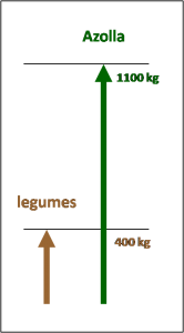 Azolla and legume nitrogen production