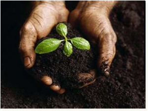 biofertilized soil