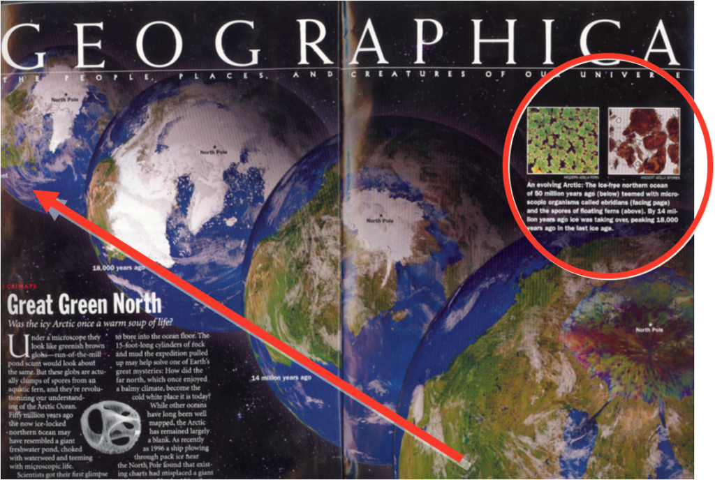 National Geographic featured the Arctic Azolla Event in MAy 2005, including illustrations of Azolla (circled) and the greenhouse to icehouse climatic shift shown by the arrow.