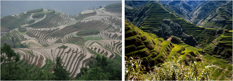 Left: Dragon's Backbone rice terraces, China. Right: Ancient Rice Terraces, Philippines