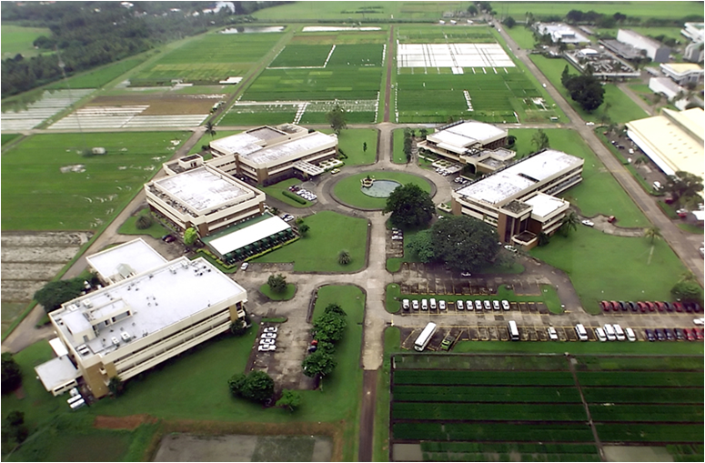 The International Rice Research Insitute
