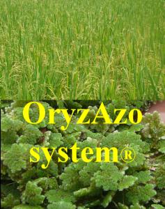 oryzazo system