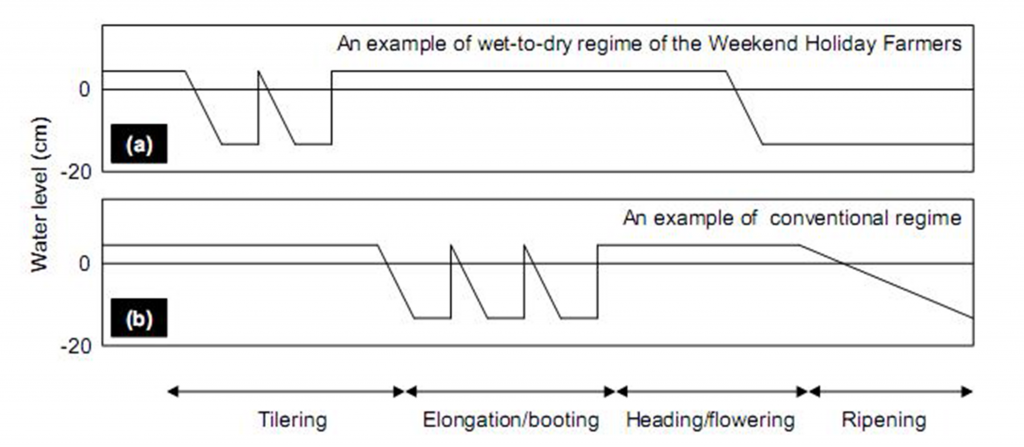 Figure 2. Schematic diagram of water regimes showing (a) the Weekend Holiday Farmers' Network. and (b) a conventional water regime for rice production.