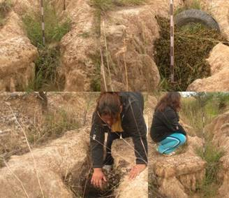 azolla erosion-crop